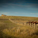 Corral of horses in residential country of Esterhazy, Saskatchewan
